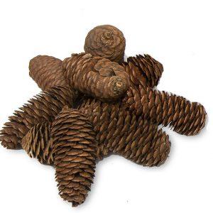 Long Pine Cones (Pack of 10)